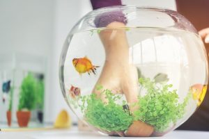 Vastu Shastra Tips on Keeping Fish Aquarium in your Home